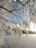 Winter snowy branches. Tree near frozen lake Royalty Free Stock Photography