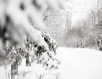 Winter snowy day in park Royalty Free Stock Image
