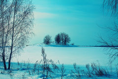 Winter snowy field Royalty Free Stock Image
