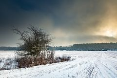 Winter snowy fields with raised hide and foggy day. Winter snowy fields and foggy day. Beautiful european winter landscape with raised hide Royalty Free Stock Photo