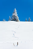 Winter snowy fir trees  and trace on snow Royalty Free Stock Images