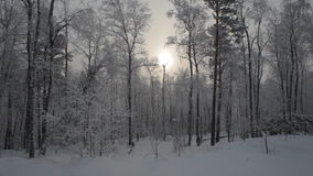 Winter Snowy Forest stock video footage