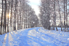 Winter snowy forest landscape Stock Photos