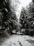 Winter in snowy forest 1. Snow in the forest with in the background a person dissolved in the woods Stock Photos