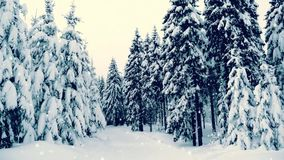 Winter snowy forest with snow covered trees, falling snow and stars. Vintage Christmas, new year slow motion animation, HD 1080. stock footage