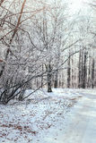 Winter snowy forest Royalty Free Stock Photos