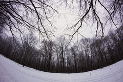 Winter snowy forest Royalty Free Stock Photography