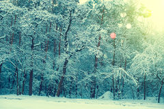 Winter snowy forest Stock Photography