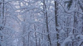 Winter snowy forest stock footage