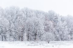 Winter snowy forest wall deadpan style white background. Winter snowy forest wall deadpan style background stock photography