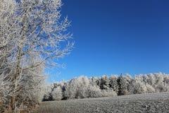 Winter snowy frosty Stock Photography