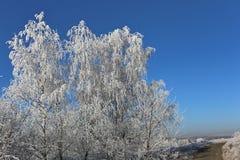 Winter snowy frosty Royalty Free Stock Photo