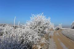 Winter snowy frosty Royalty Free Stock Image