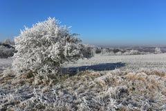 Winter snowy frosty Stock Photos