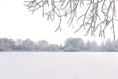 Winter snowy frosty scene Royalty Free Stock Photo