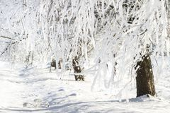 Winter. Snowy and frosty white trees. Christmas time. Xmas background. Scenery winter. Frost and snow. Winter. Snowy and frosty white trees. Christmas time royalty free stock photos