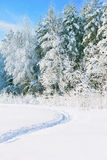 Winter snowy landscape Royalty Free Stock Images