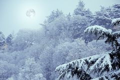 Winter snowy landscape in evening with full moon and fir tree Royalty Free Stock Photography