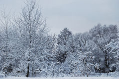 Winter snowy landscape Royalty Free Stock Photo