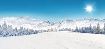 Winter snowy landscape Stock Image