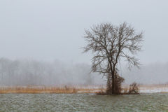Winter Snowy Landscape lake Royalty Free Stock Photography