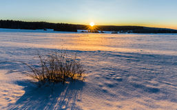 Winter snowy landscape lit by the setting sun Stock Images