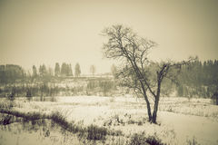 Winter snowy landscape with a lone tree. Toned Stock Photo
