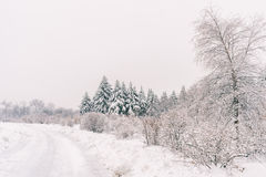 Winter snowy landscape in Montreal stock photography
