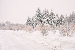 Winter snowy landscape in Montreal royalty free stock photography