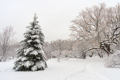 Winter snowy landscape in Montreal Royalty Free Stock Image
