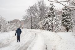 Winter snowy landscape in Montreal, Quebec Botanical Garden stock images