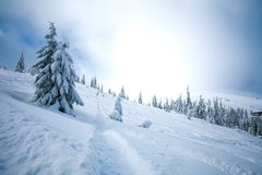 Winter snowy landscape in mountains of spruce forest nature Royalty Free Stock Images