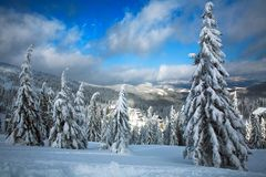 Winter snowy landscape in mountains of spruce forest nature Stock Photos
