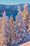 Winter snowy landscape, Postavaru Brasov. Mountain Landscape royalty free stock image