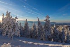 Winter snowy landscape, Postavaru Brasov. Mountain Landscape stock image