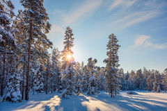 Winter snowy Landscape with sun and snow covered trees Royalty Free Stock Photography