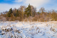 Winter snowy landscape at sunset Royalty Free Stock Photo