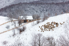 Winter snowy landscape of the transylvanian village. Winter mountain landscape of the transylvanian village and the houses isolated on a hill and a flock of Stock Photo