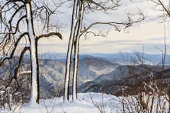 Winter snowy mountain forest scenic landscape Stock Image