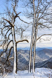 Winter snowy mountain forest scenic vertical landscape Royalty Free Stock Photo