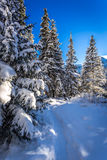 Winter snowy mountain trail Royalty Free Stock Image