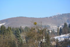 Winter snowy mountains. Clear winter morning on the mountains - forest Stock Photo