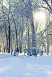 Winter snowy park Royalty Free Stock Images