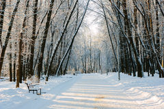 Winter snowy park Stock Images