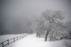 Winter path in the Giant Mountains royalty free stock image