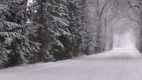 Winter snowy road with alley old trees and  fog stock video footage
