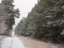 Winter snowy road. Winter snowy road in the larch forest royalty free stock photos