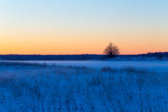 Winter snowy rural landscape in evening Royalty Free Stock Images