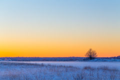 Winter snowy rural landscape in evening Stock Photos