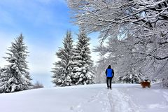 Winter Snowy Scene Man Walking. A man walks in the snow in a cold winter day. Surrounded by snowy beech and spruce trees stock photos